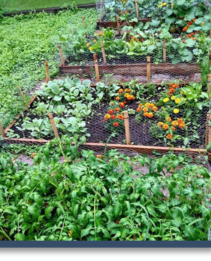 Garden St. Peters Kitchen Rochester NY